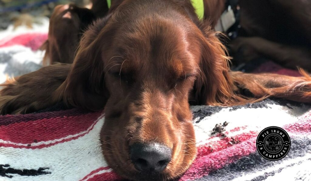 Best Tips for Camping with Your Dog @ Pie Irons and Campfires